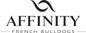 Affinity French Bulldogs